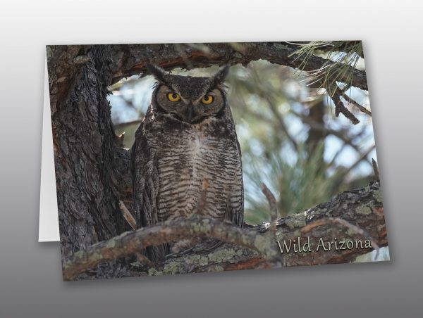 Great Horned Owl - Moment of Perception Photography