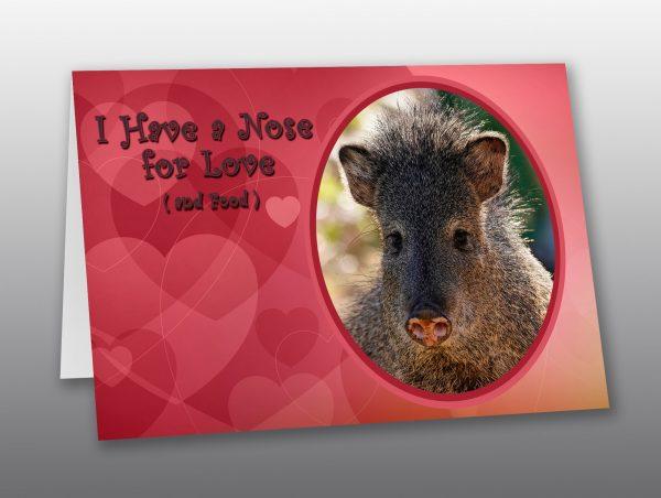Javelina Valentine Card - Moment of Perception Photography