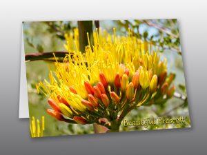 desert agave flower - Moment of Perception Photography