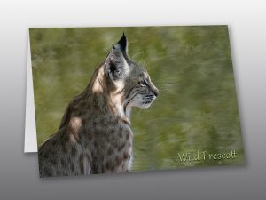 portrait of a bobcat with copy - Moment of Perception Photography