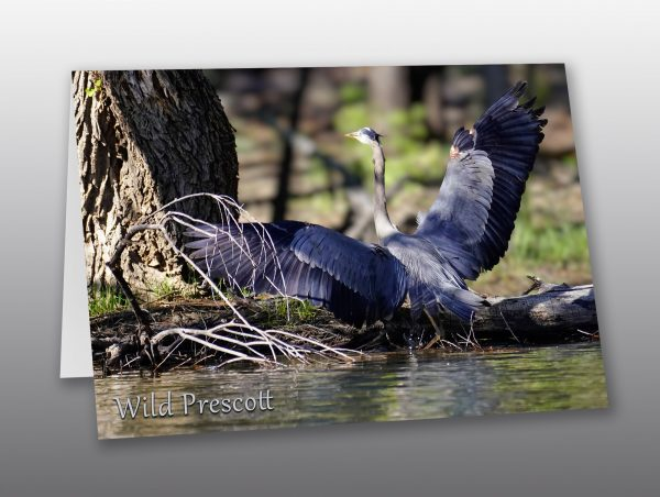 great blue heron - Moment of Perception Photography
