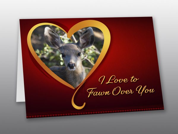 fawn valentine card - Moment of Perception Photography