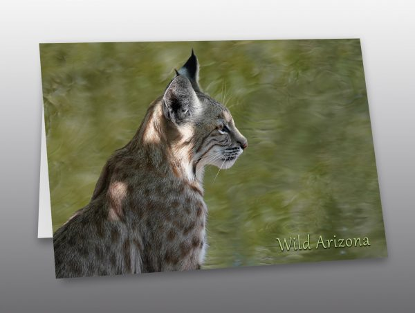 portrait of a bobcat without copy - Moment of Perception Photography