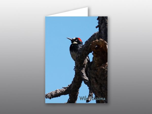 red headed woodpecker - moment of perception photography