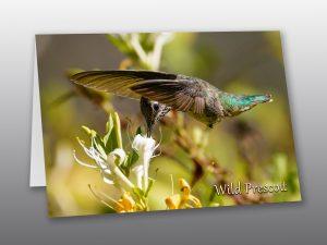 Annas Hummingbird - Moment of Perception Photography