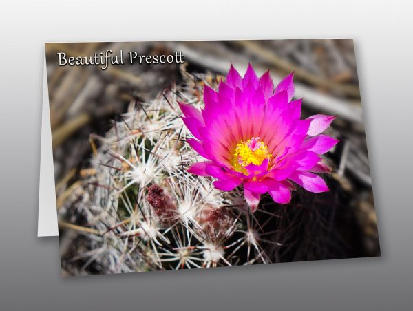 hot pink cactus flower - Moment of Perception Photography