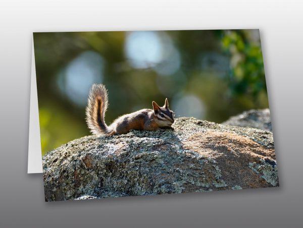 Arizona chipmunk - Moment of Perception Photography