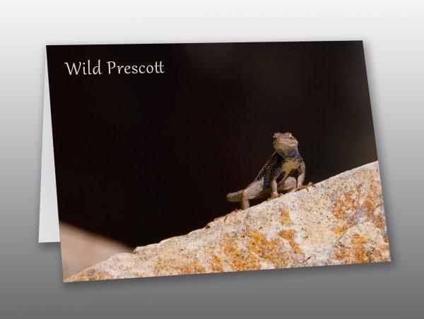 desert lizard - Moment of Perception Photography