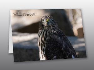 hawk close up - Moment of Perception Photography