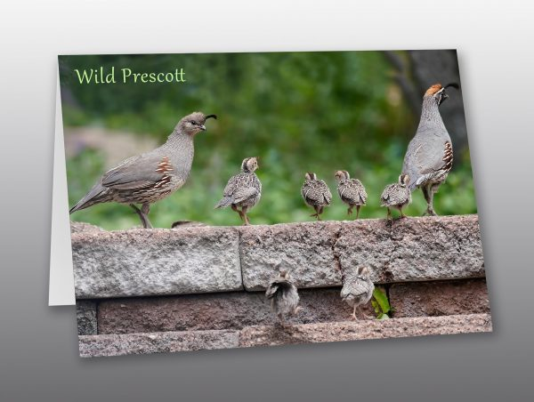 Quail family - Moment of Perception Photography