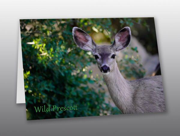 deer doe portrait - Moment of Perception Photography
