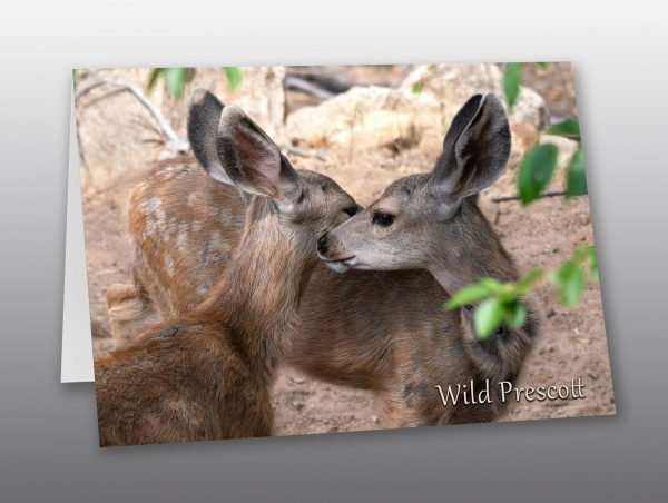 two mule deer fawns - Moment of Perception Photography