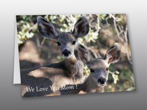 baby deer - Moment of Perception Photography