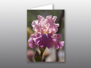 Iris flower - Moment of Perception Photography