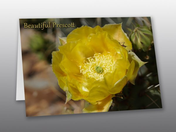 Yellow cactus flower - Moment of Perception Photography