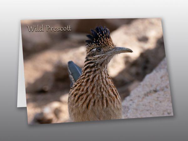 Southwestern Roadrunner - Moment of Perception Photography
