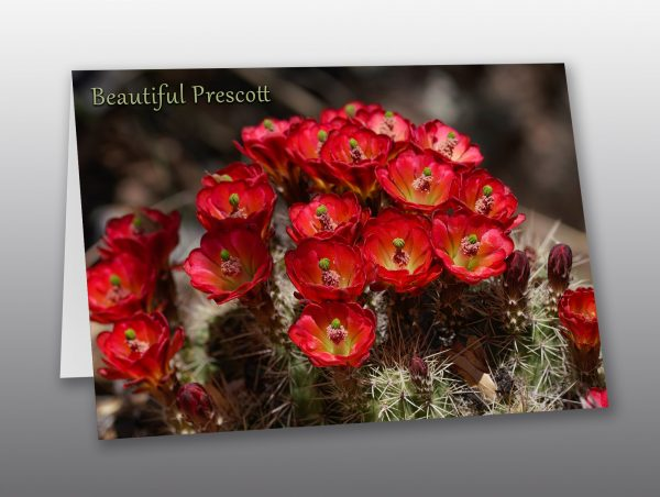 Bright Red Cactus Flowers - Moment of Perception Photography