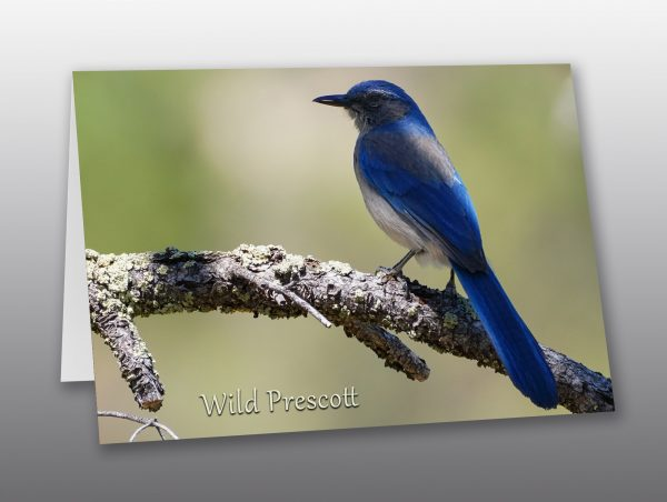 Blue Jay - Moment of Perception Photography