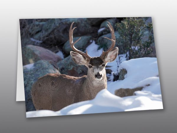snow buck - Moment of Perception Photography