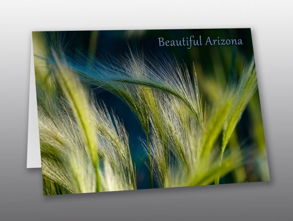 wild grass in the high desert - Moment of Perception Photography