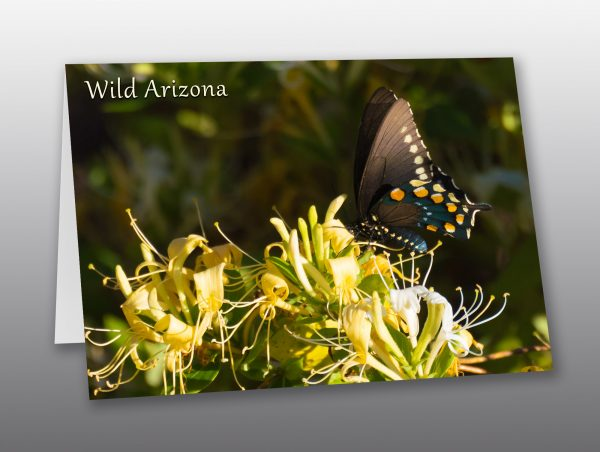 Swallowtail Butterfly Among the Honeysuckle - Moment of Perception Photography