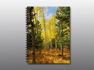 aspen forest in autumn - Moment of Perception Photography