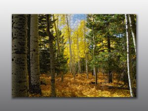 flagstaff landscape - Moment of Perception Photography