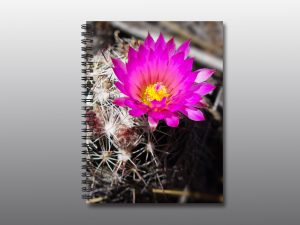 pink cactus flower - Moment of Perception Photography