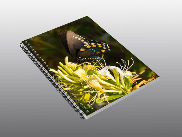 swallowtail butterfly - Moment of Perception Photography