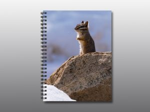 chipmunk in snow - Moment of Perception Photography