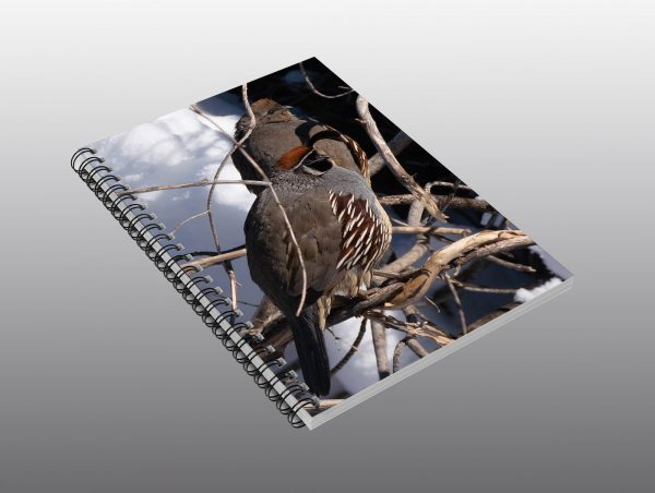 Quail male and female - Moment of Perception Photography