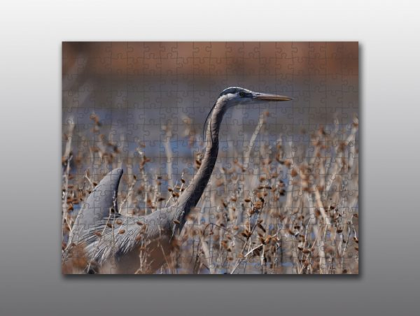 heron in the reeds - Moment of Perception Photography