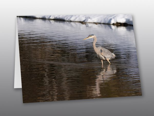 large water bird - Moment of Perception Photography