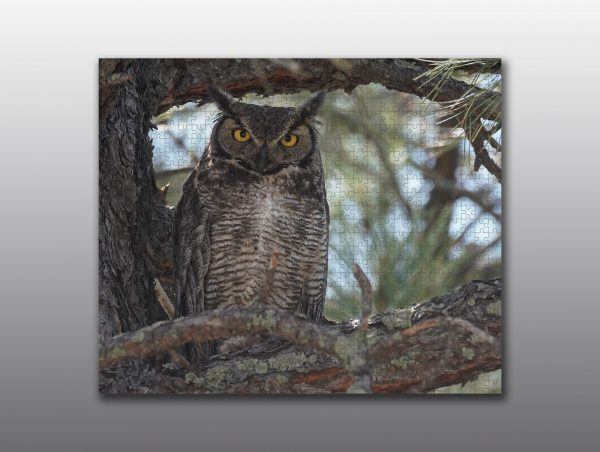 Owl perched in a tree - Moment of Perception Photography