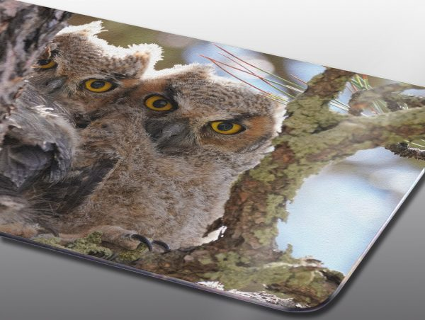 baby great horned owls - Moment of Perception Photography