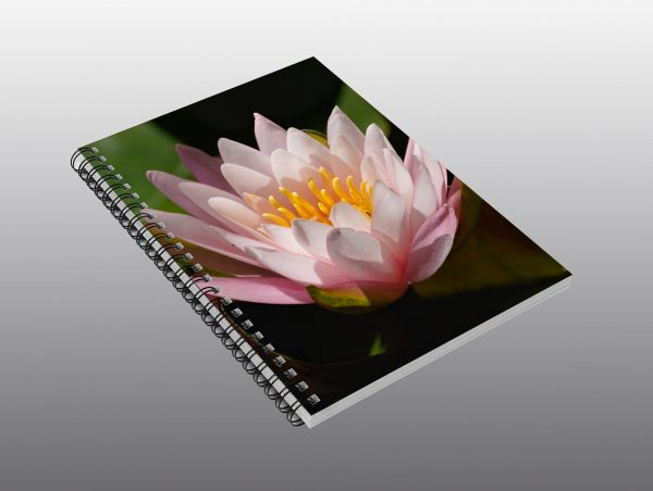 water lily close up - Moment of Perception Photography