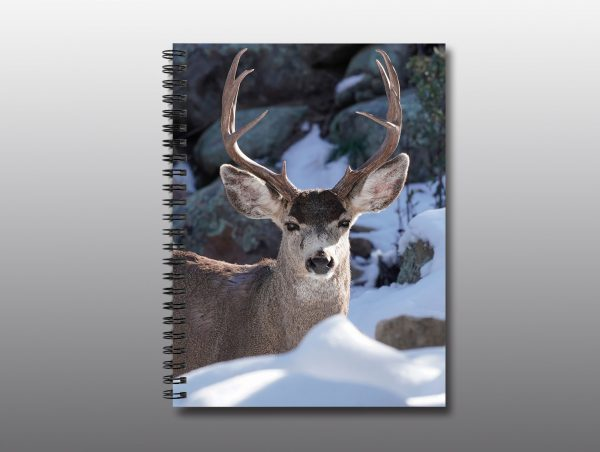 buck with large antlers in winter - Moment of Perception Photography