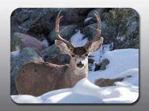 buck with large antlers - Moment of Perception Photography