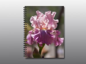 blooming iris - Moment of Perception Photography