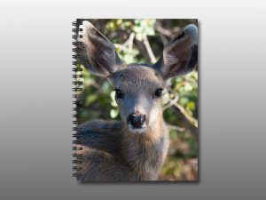 Mule Deer Fawn - Moment of Perception Photography