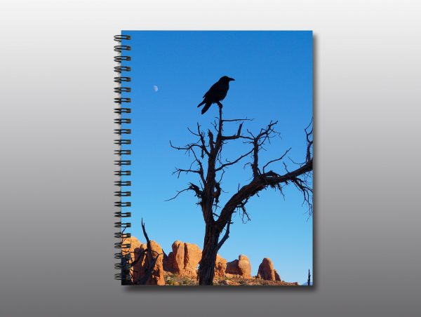 raven in barren tree - Moment of Perception Photography