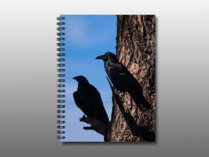 ravens perched in a tree - Moment of Perception Photography