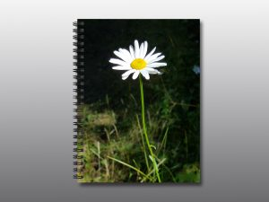 wild daisy flower - Moment of Perception Photography