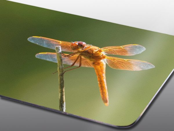 Orange dragonfly closeup - Moment of Perception Photography
