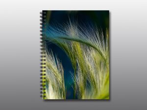 wild grass - Moment of Perception Photography