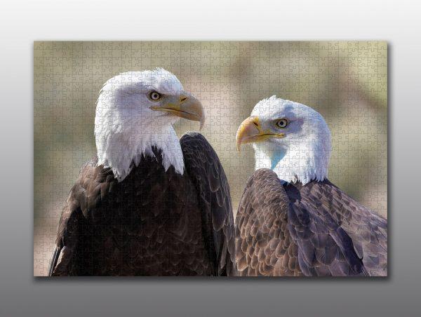 Bald Eagle close up - Moment of Perception Photography