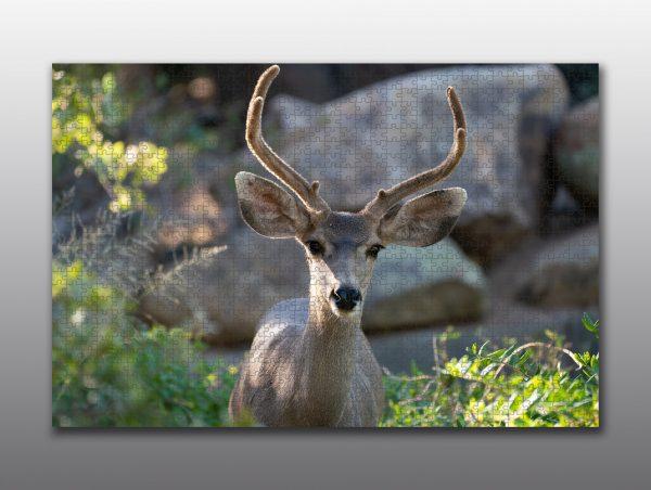 mule deer buck portrait - Moment of Perception Photography