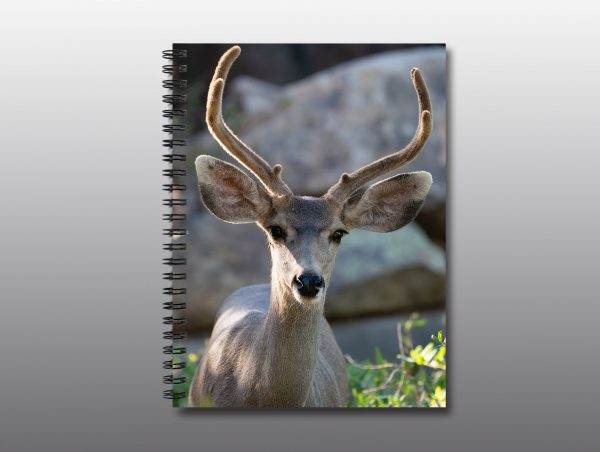 young buck with antlers - Moment of Perception Photography