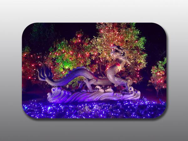 Christmas Night Garden - Moment of Perception Photography