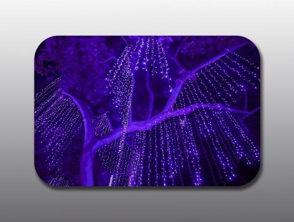 Christmas Cutting Board - Moment of Perception Photography